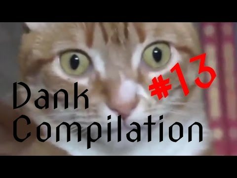 4chan DANK YLYL WEBM Compilation #13